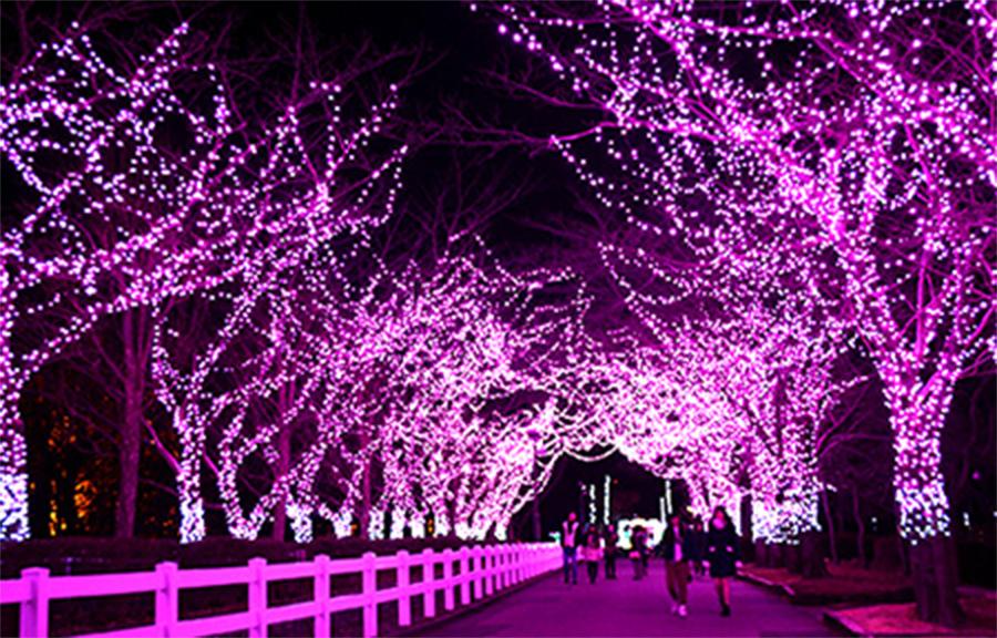 桜イルミネーション
